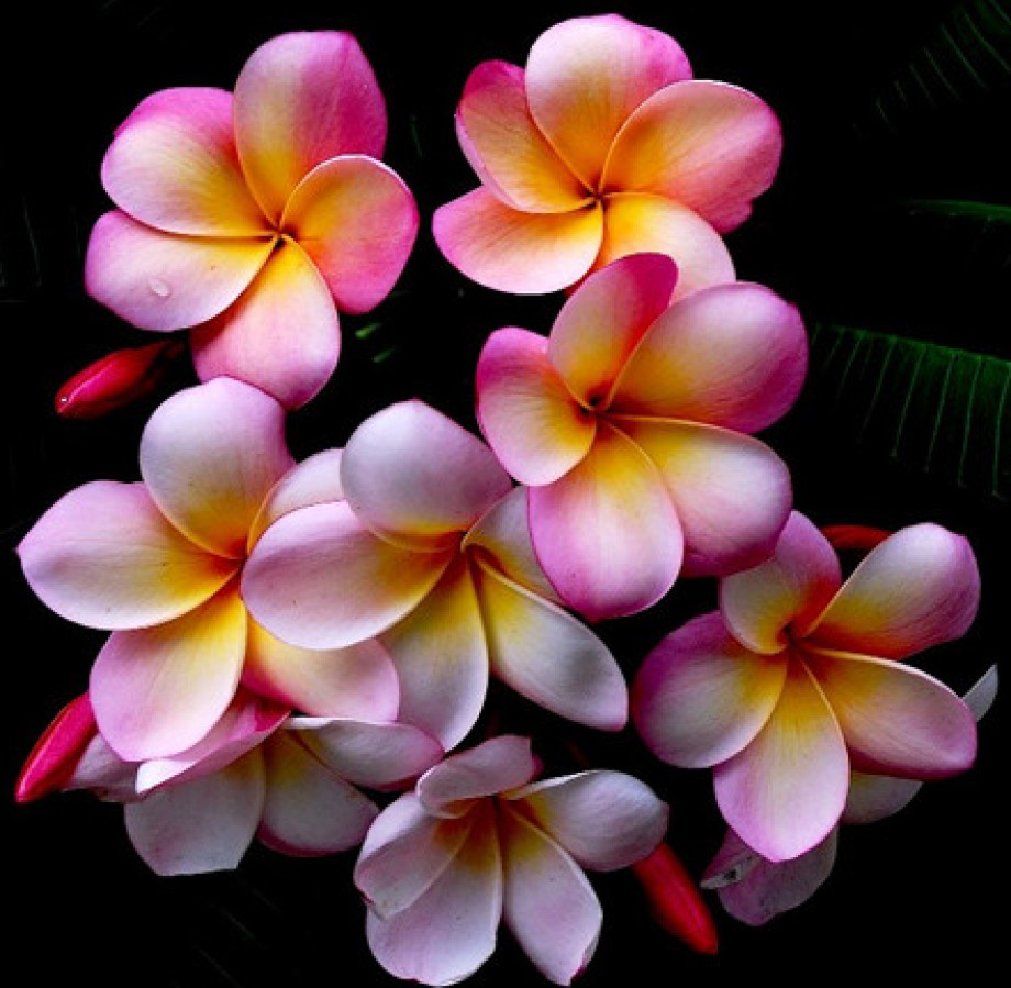 Most beautiful flowers in the world pictures love most beautiful flowers in the world pictures izmirmasajfo